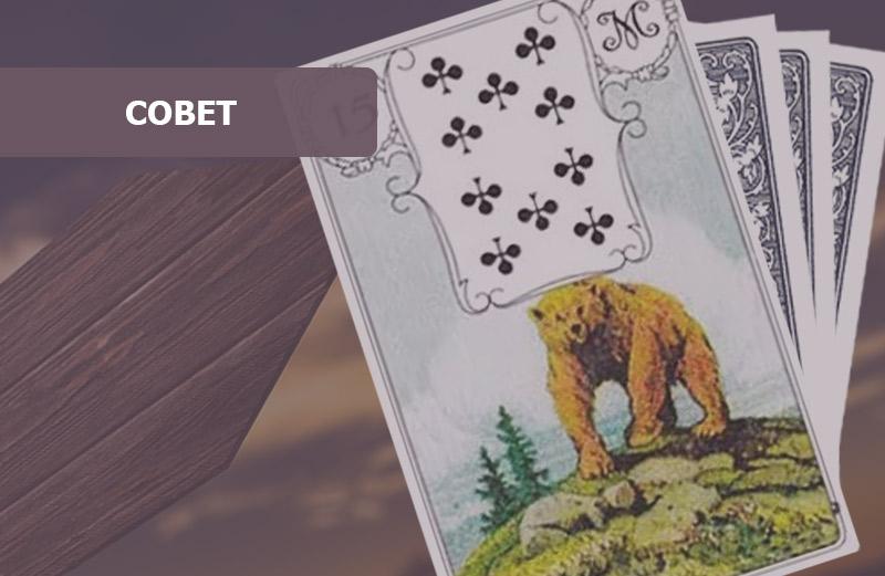 Медведь в картах Ленорман: совет
